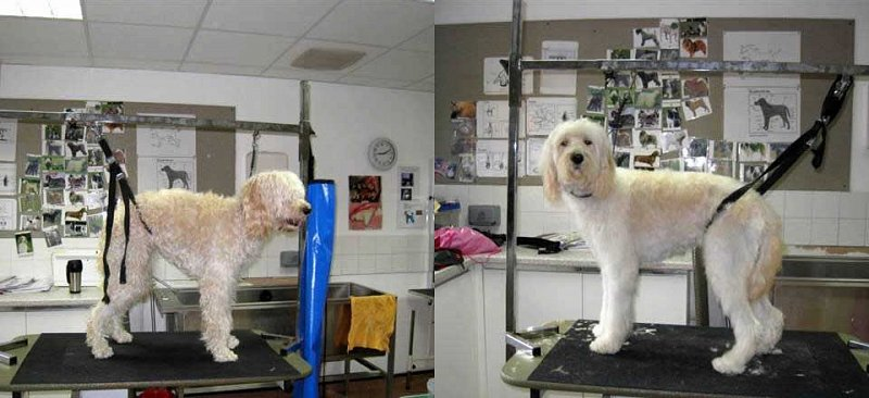 Before & after dog grooming at Smiley Dogs